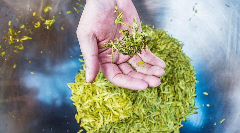 Чай | Фото: iz.ru