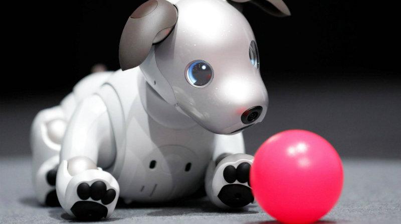 Sony Aibo | Photo: financialtribune