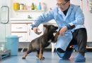 В Китае клонировали полицейскую собаку