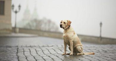 Пес | Фото: Deine Tierwelt